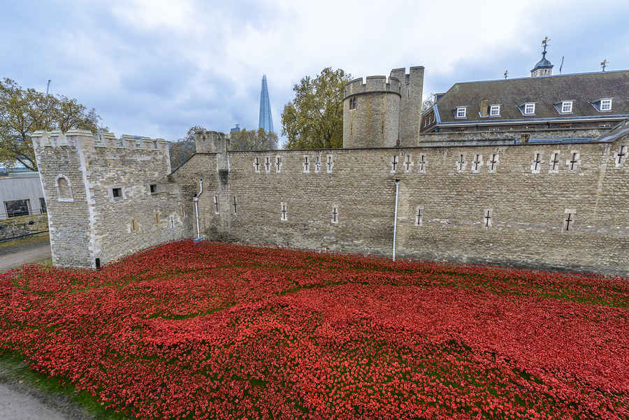 Almost 900000 ceramic poppies are installed at The Tower of London to commemorate Britain's involvement in the First World War.